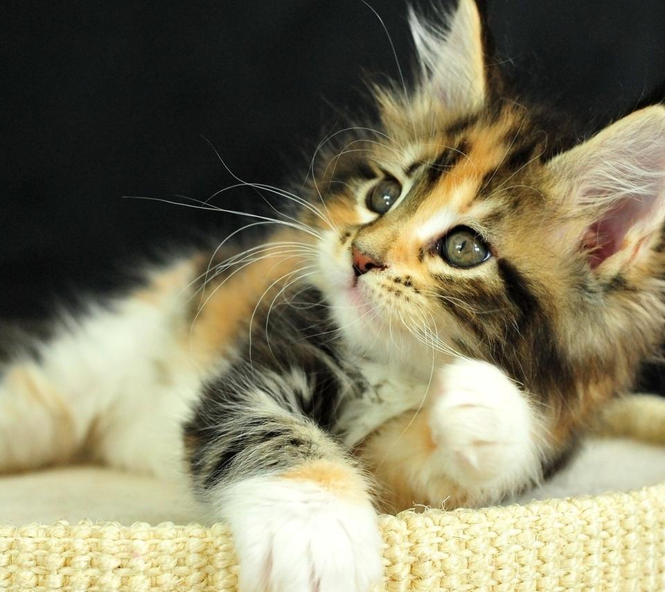 рыжий, взгляд, котэ, котенок, Кошка, глаза, cat