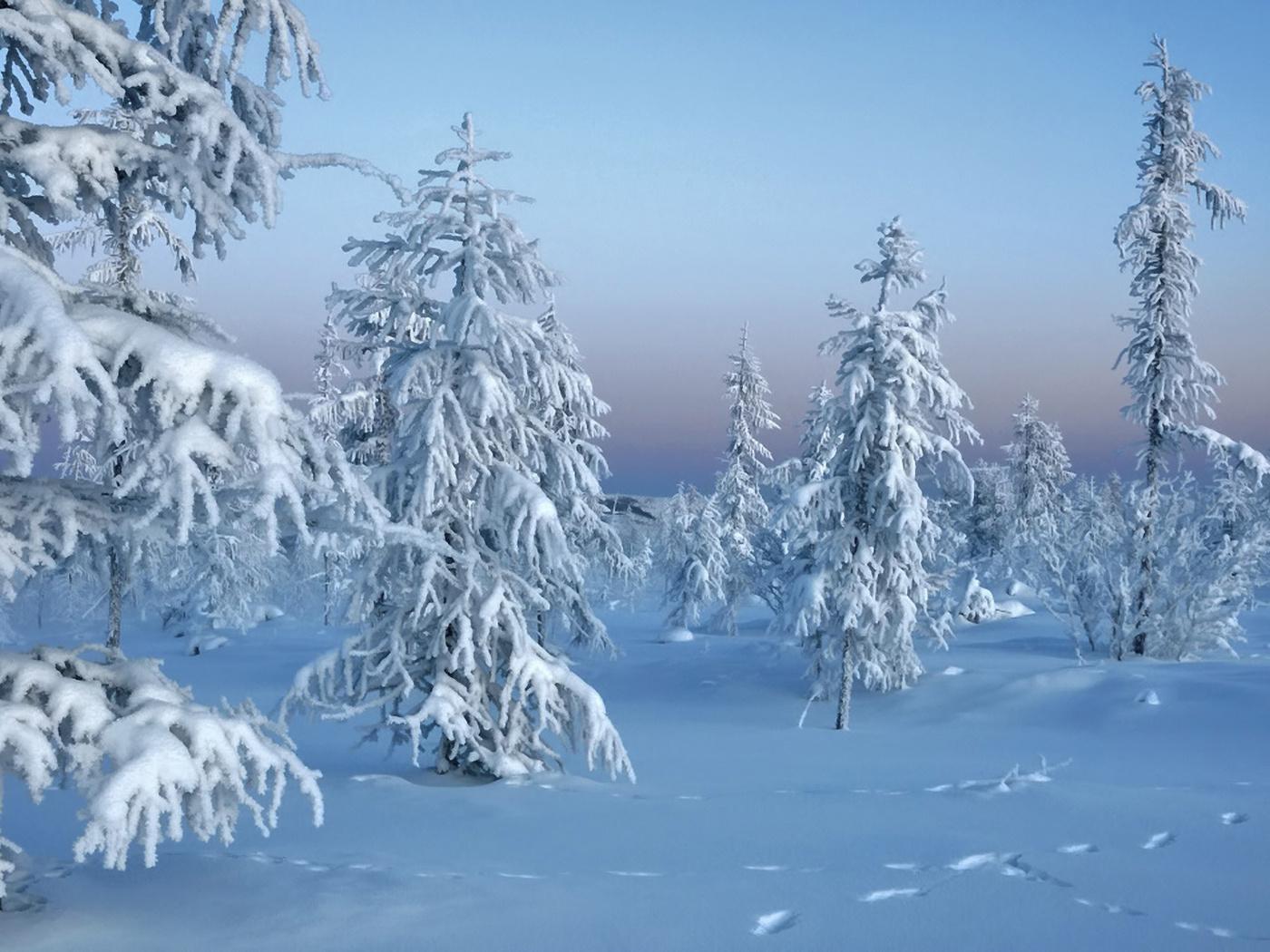 снег, лес, trees in snow, Зима, природа, winter
