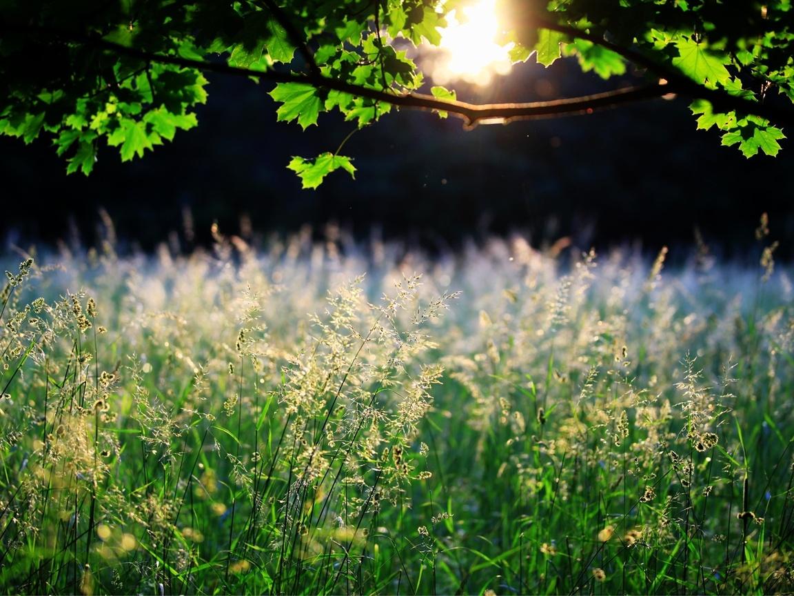 дерево, колоски, Трава, солнце, природа, листья