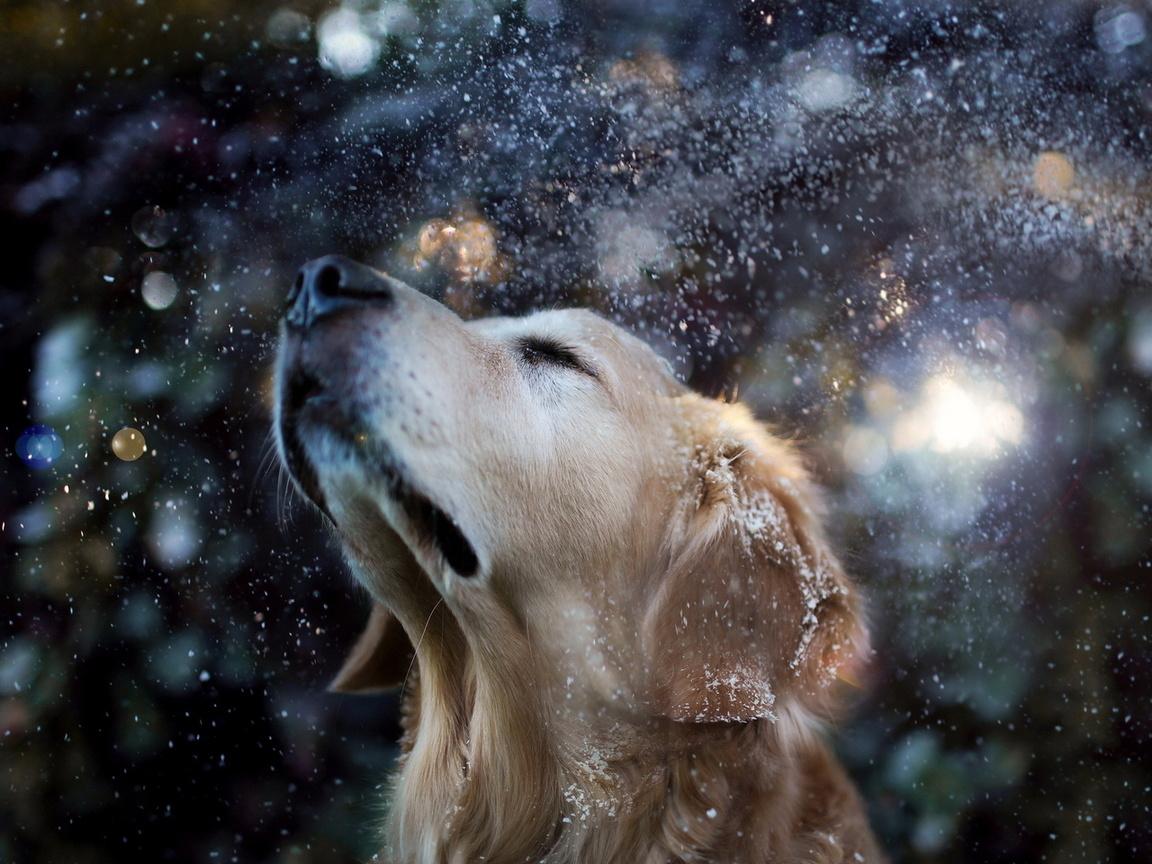 снег, Собака, друг