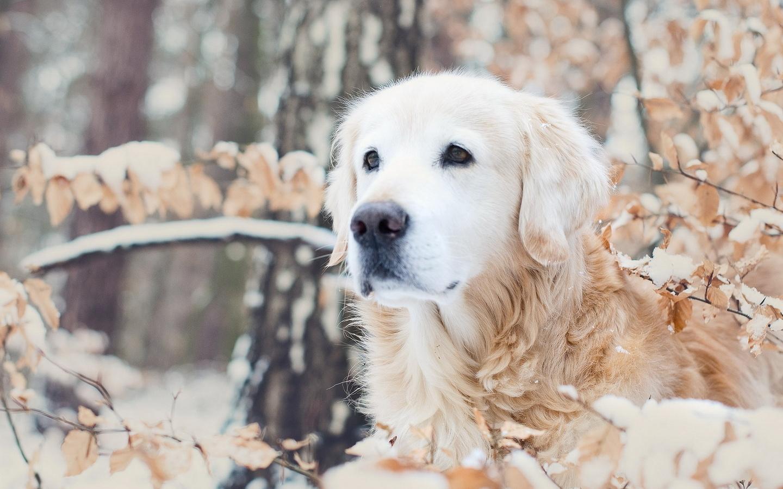 Собака, зима, природа