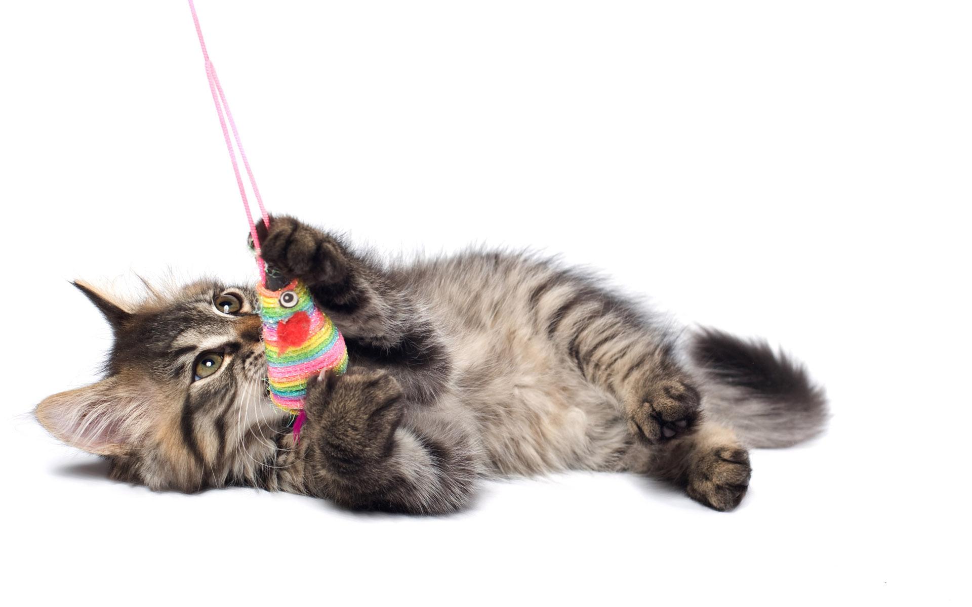 кошка, полосатый, белый фон, котенок, кот, игрушка, Cat