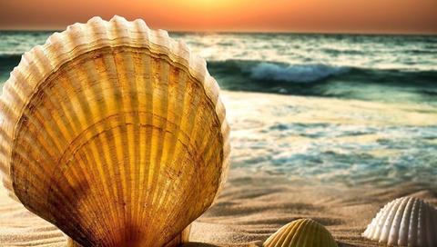 лето, песок, море, пляж, ракушка