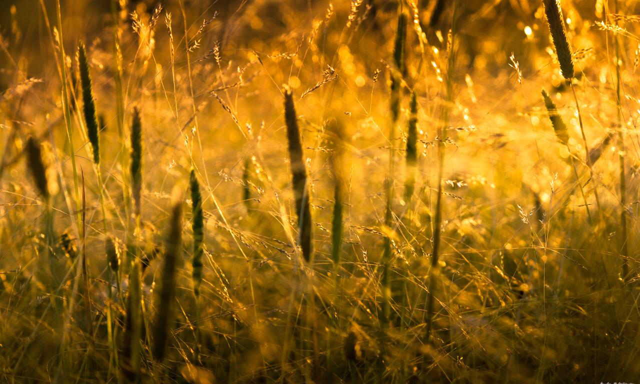 Макро, macro, природа, grass, свет, трава, sunlight, nature, солнце