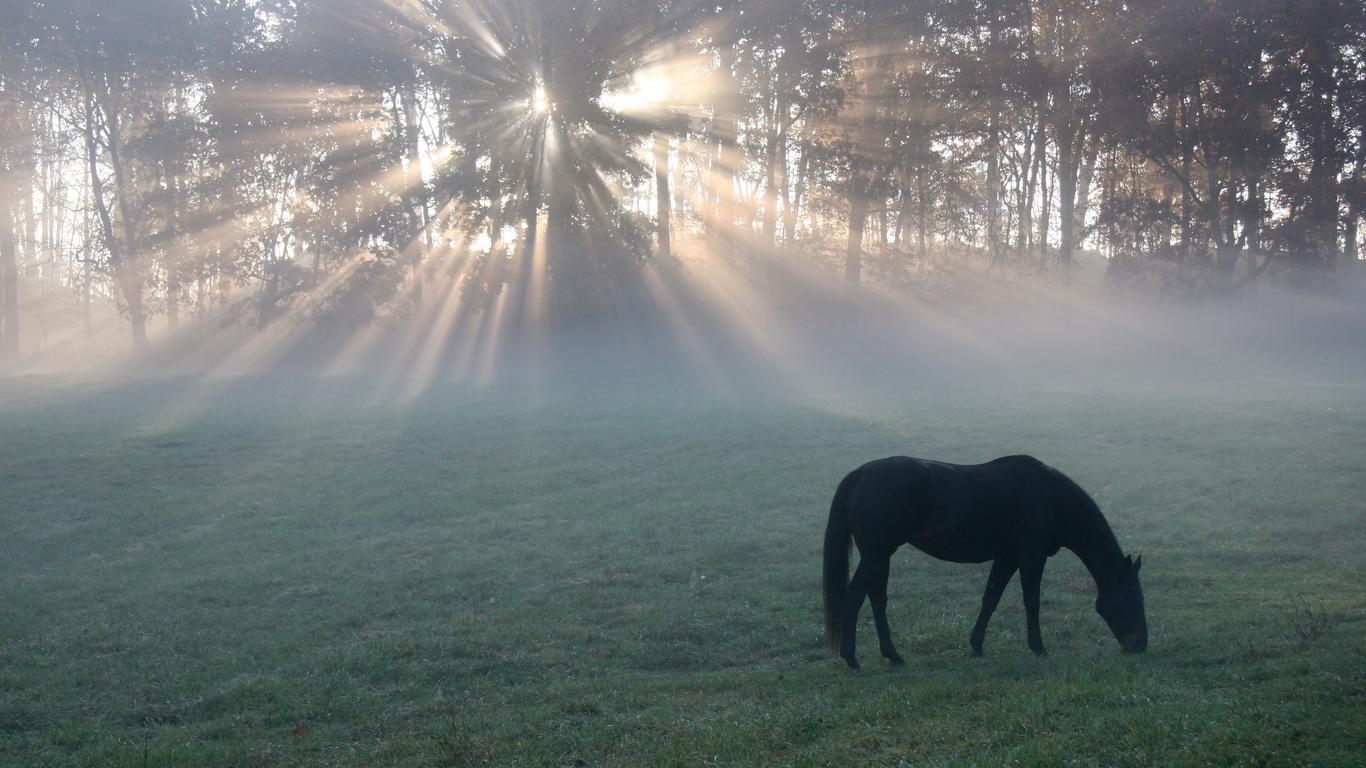 Утро, конь, light, поле, horse