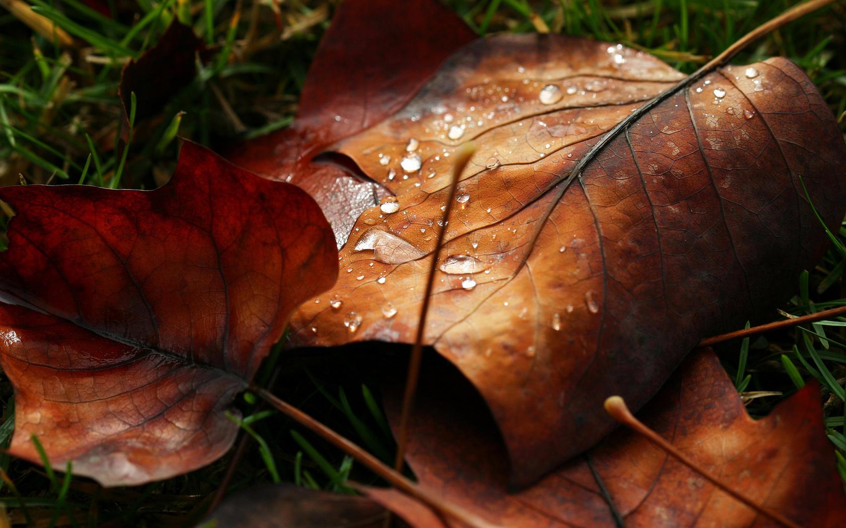 роса, macro, вода, листик, листья, Макро, капля, листочек