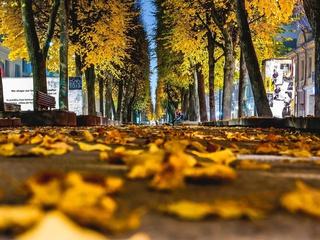 желтые, autumn, листья, macro, листочки, leave, leaves, Макро, осень