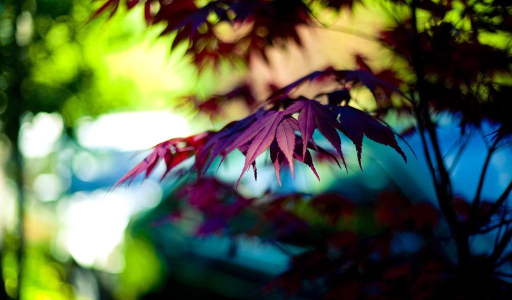 боке, Макро, фиолетовый, листик, дерево, листочек