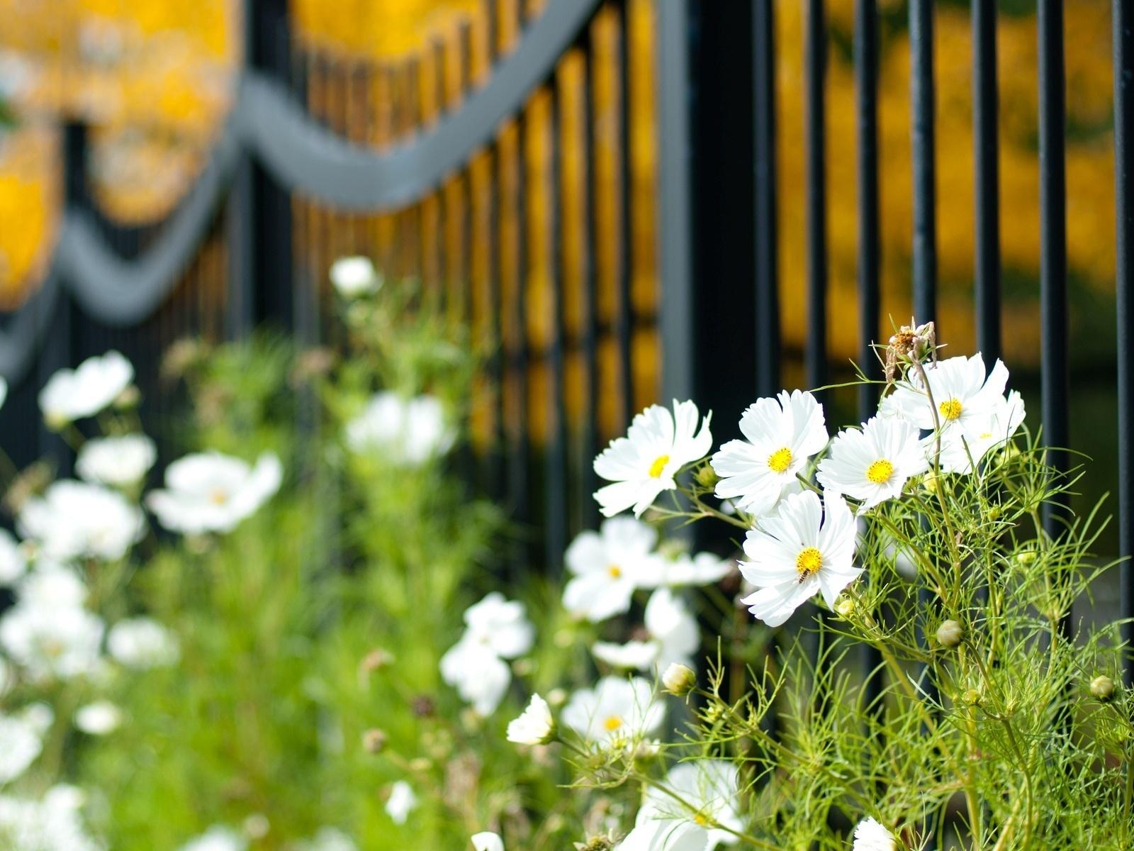 цветы, цветочки, ворота, ограждение, забор, Макро