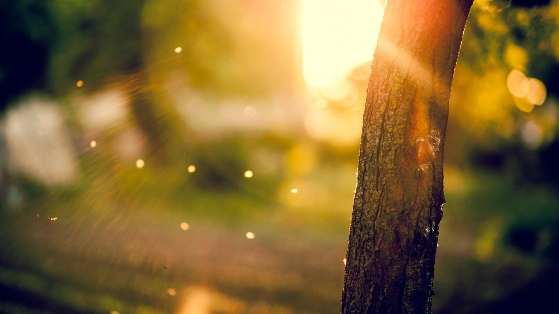 tree, кора, размытие, дерево, ствол, деревья, Макро