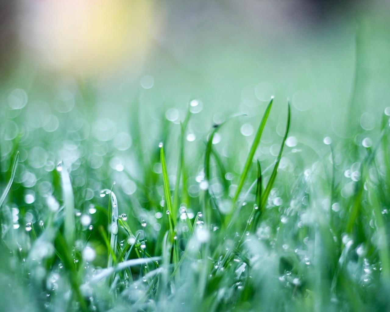 трава, травка, капли, Макро, зеленый, зелень, обои, фон