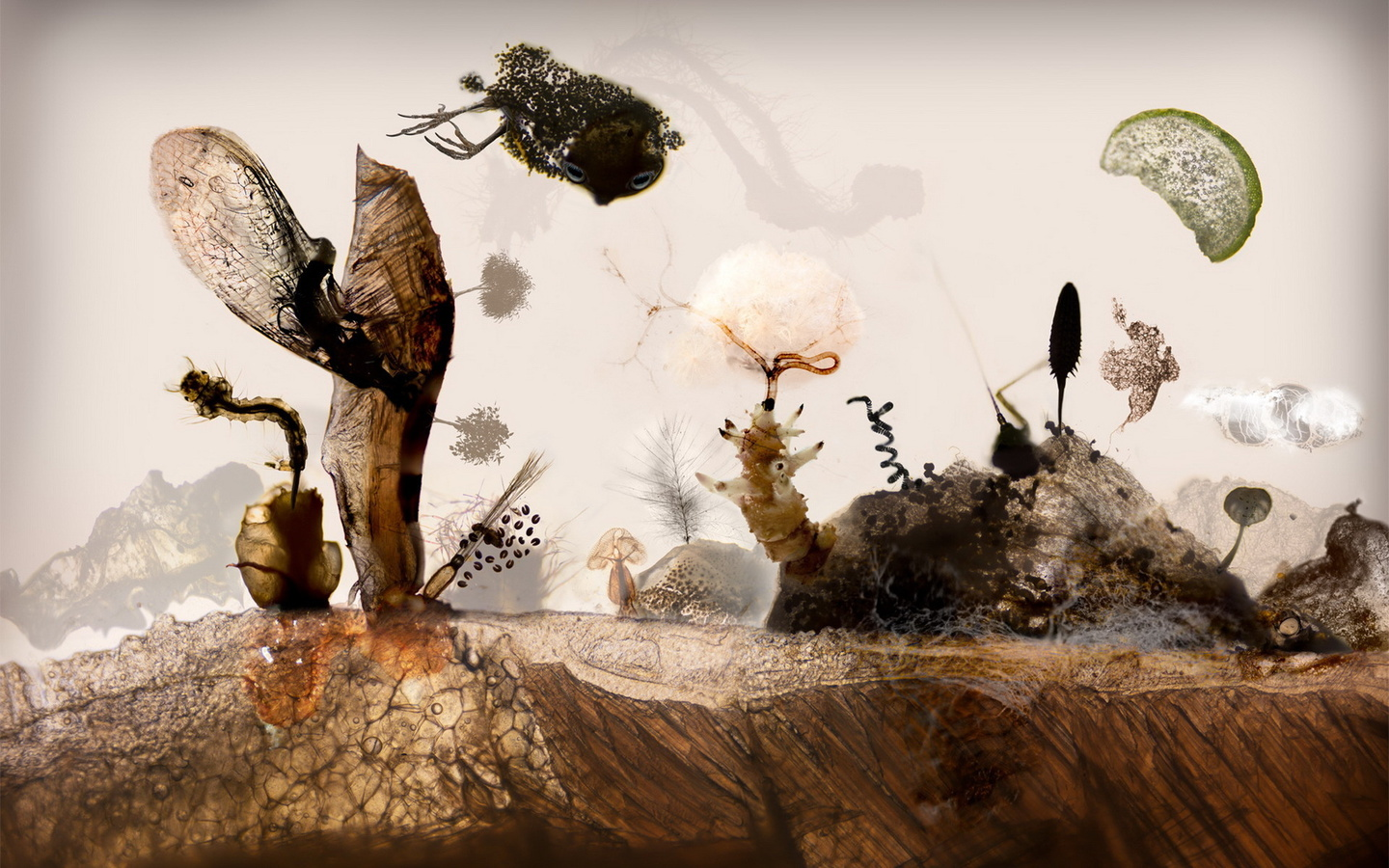 landscape, Microscopy, seeds, meat, insects, fish