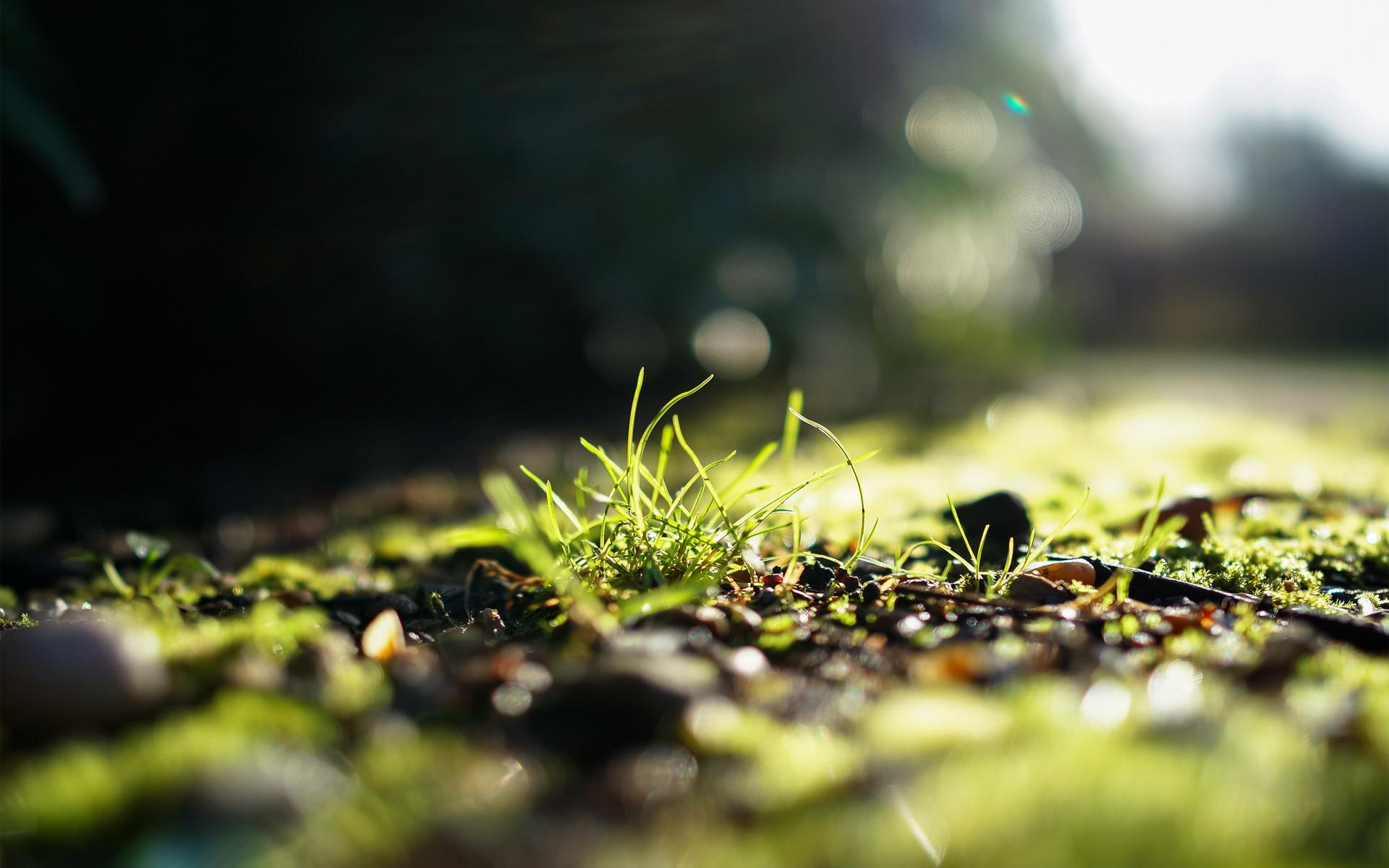 зелень, фокус, зелень, солнце, свет, Трава