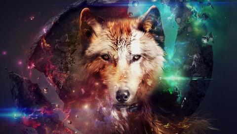 коллаж, абстракция, красивые картинки, Волк, животное