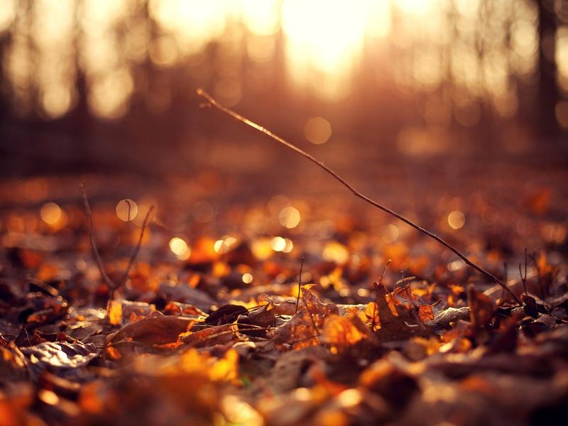 фон, солнце, осень, Макро, цветы, листочки, листья