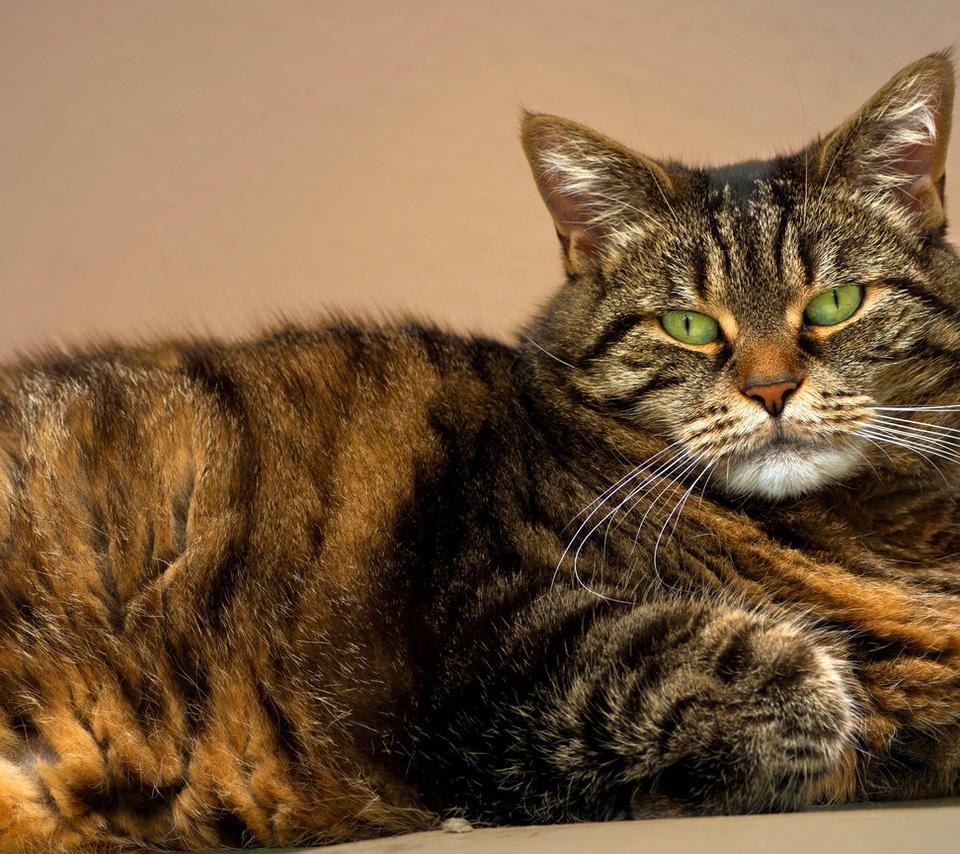 глаза, зеленые, усы, кошка, полосатый, Кот, взгляд, морда