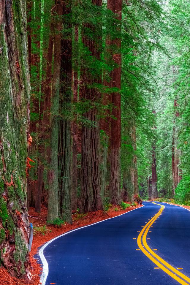 природа, дорога, лес, деревья, секвойя, гиганты, красиво