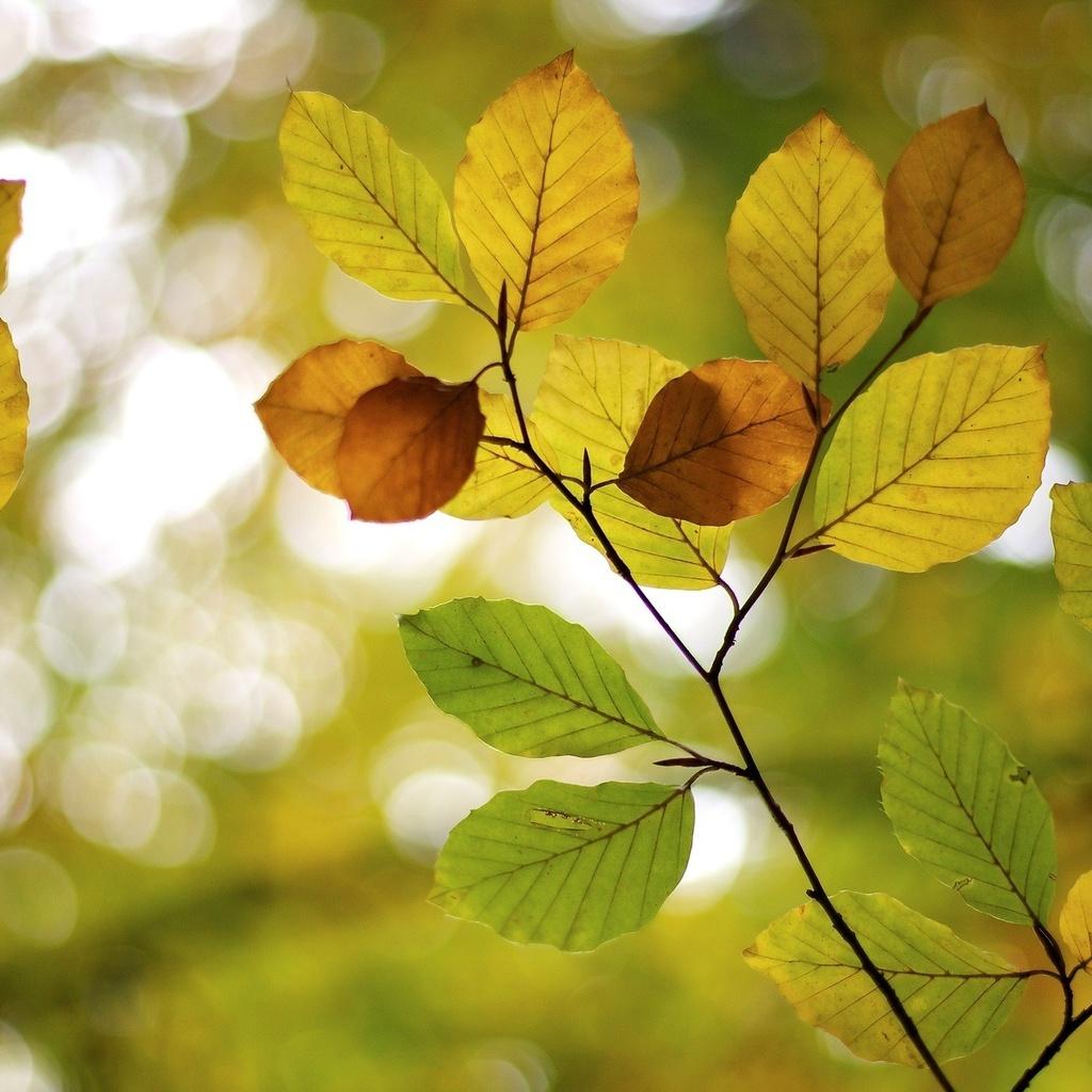 листья, Макро, macro, размытие, листочки, дерево, деревья