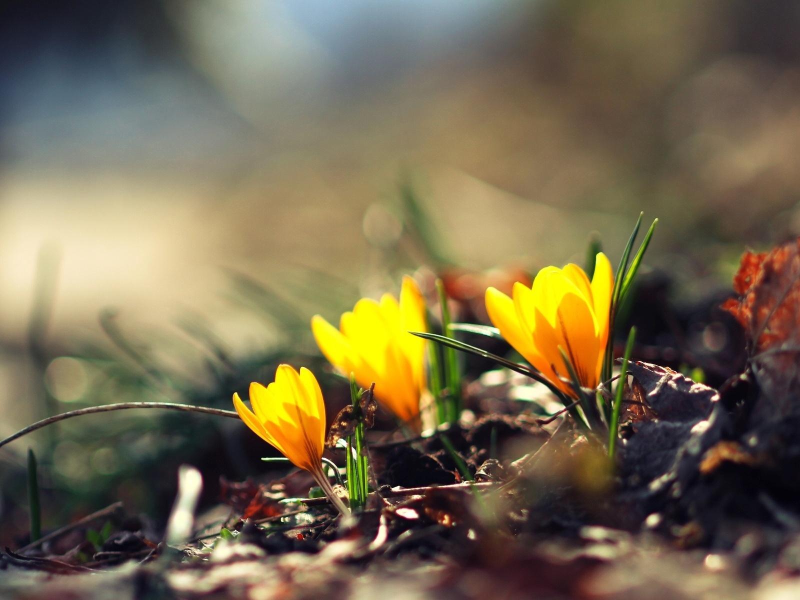 Цветы, цветок, боке, зелень, цветочки, размытие, желтый