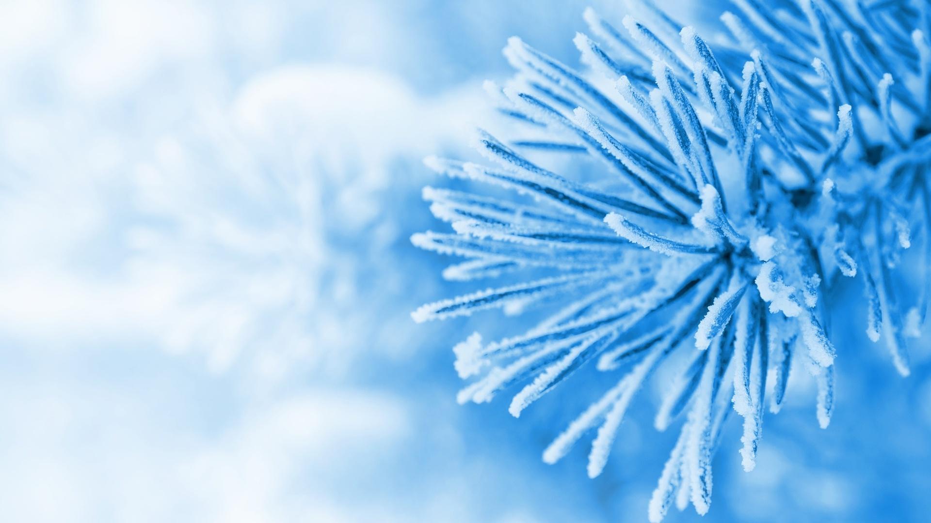 snow, елочка, елка, winter, ель, зима, снег, голубой, Макро