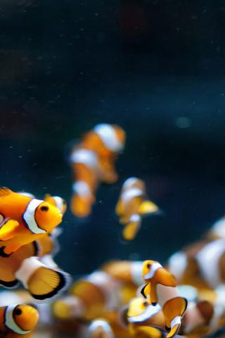 Аквариум, клоуны, рыбки