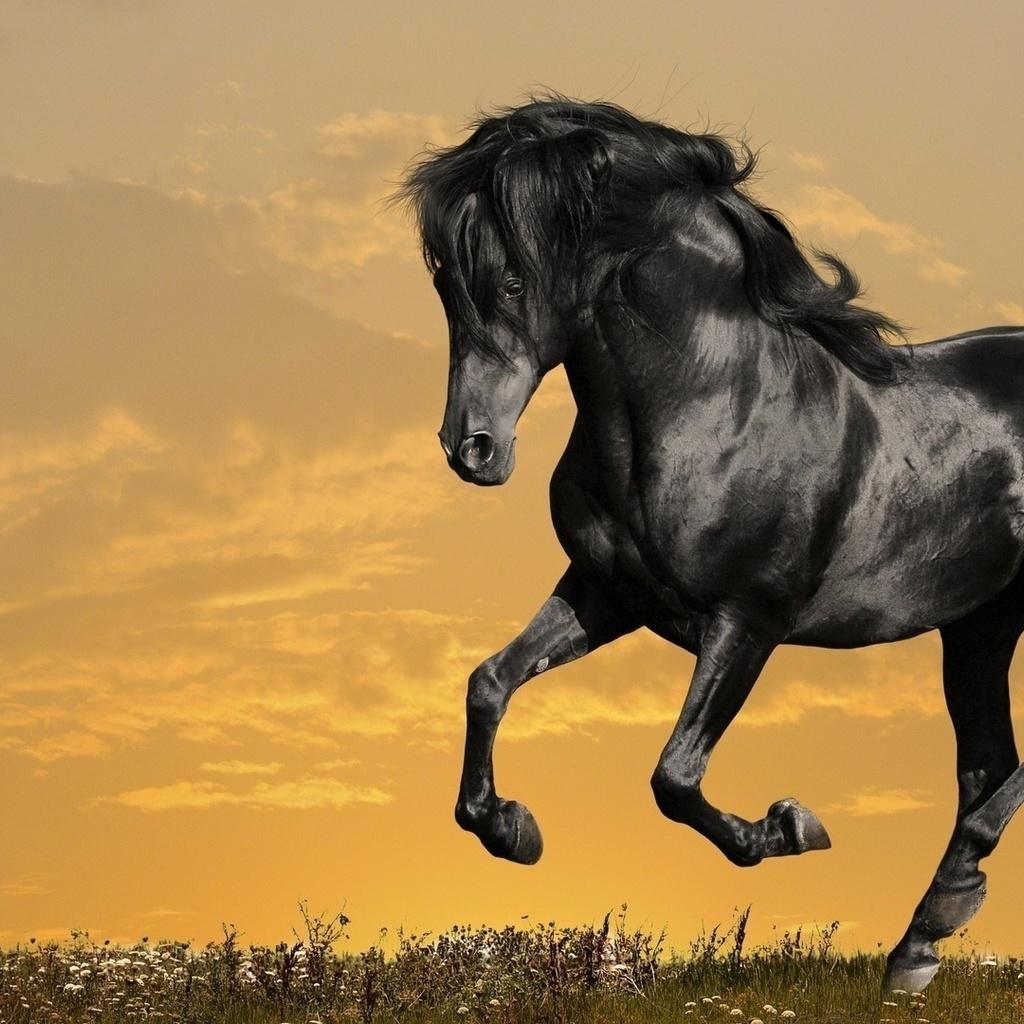 облака, трава, Лошадь, конь