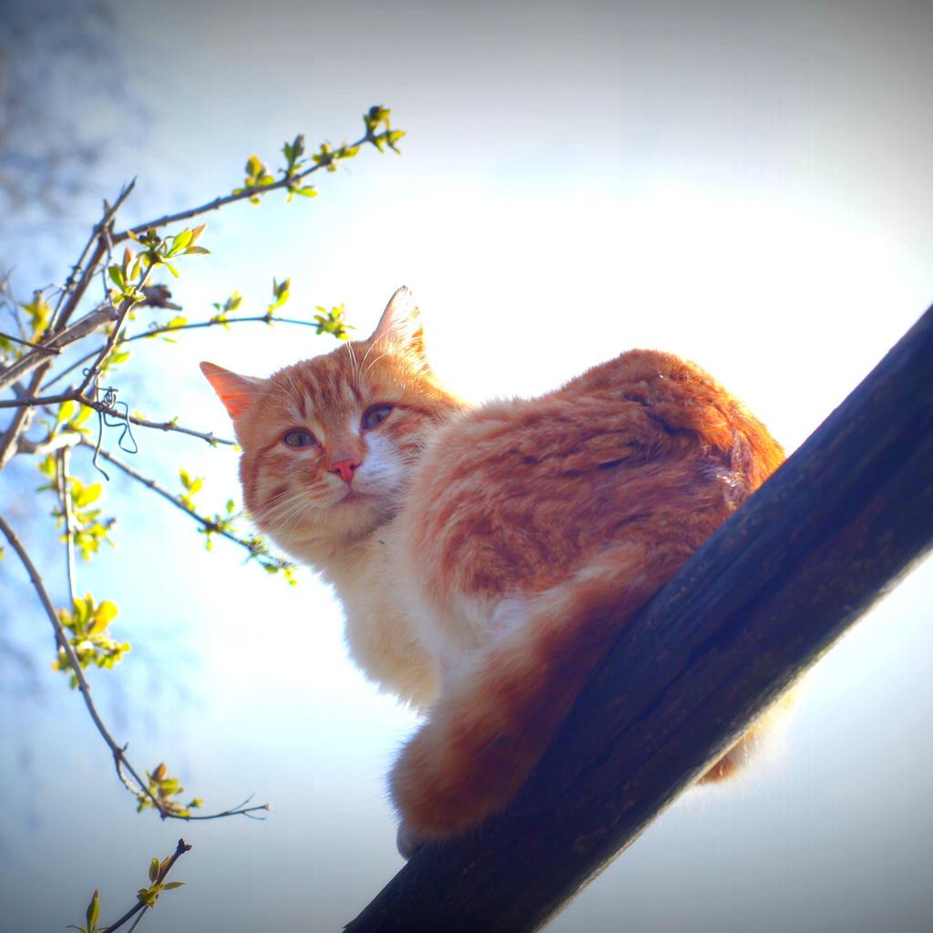 утро, животные природа, кот, Весна, усы, солнце