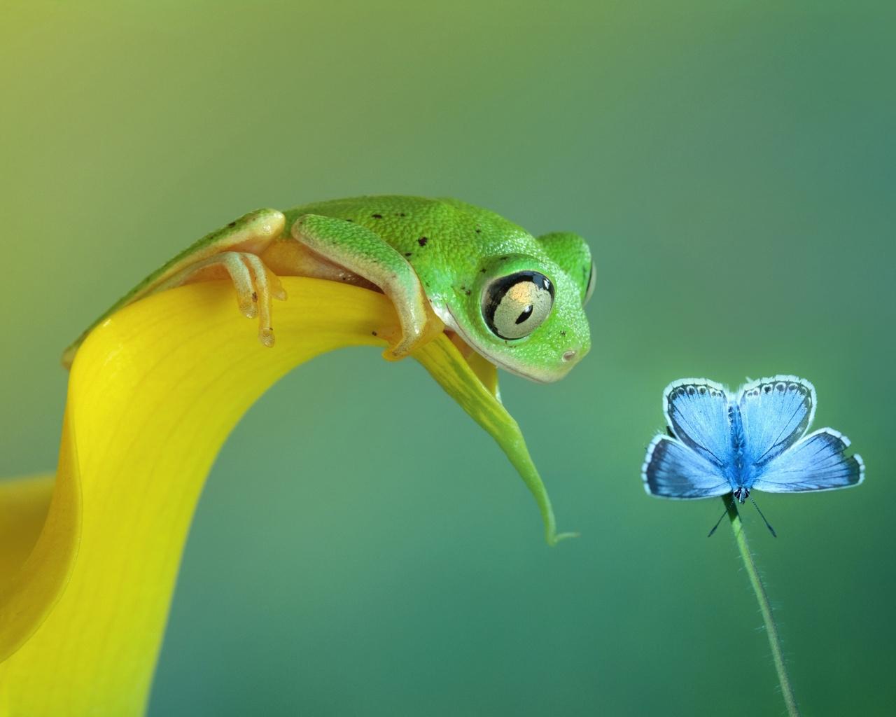 любопытство.jpg, бабочка, Лягушка