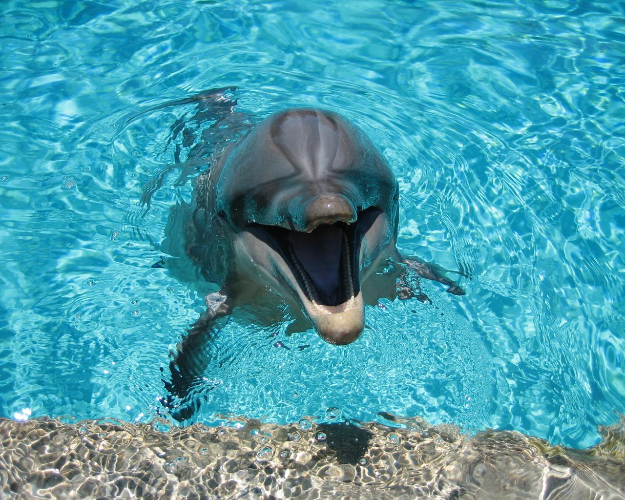 вода, улыбка, Дельфин