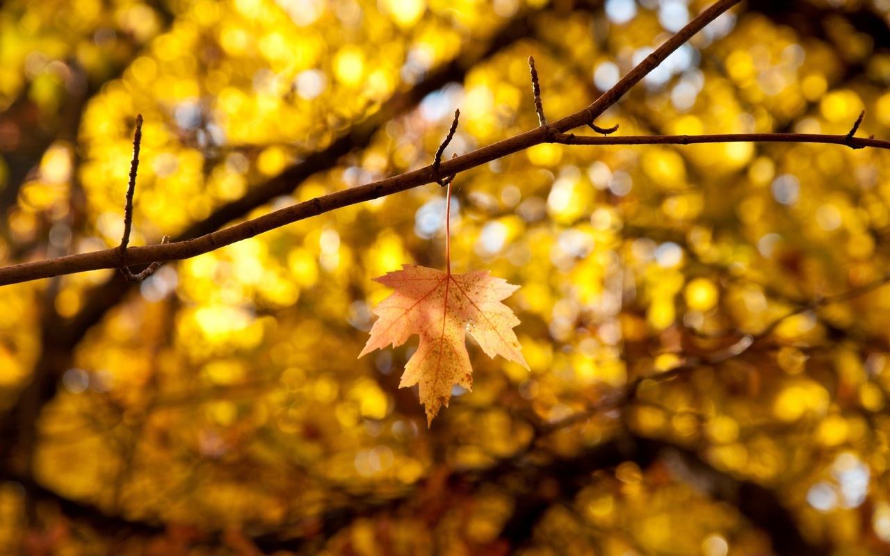 Макро, autumn, листья, leaves, листик, желтый, осень, листочек