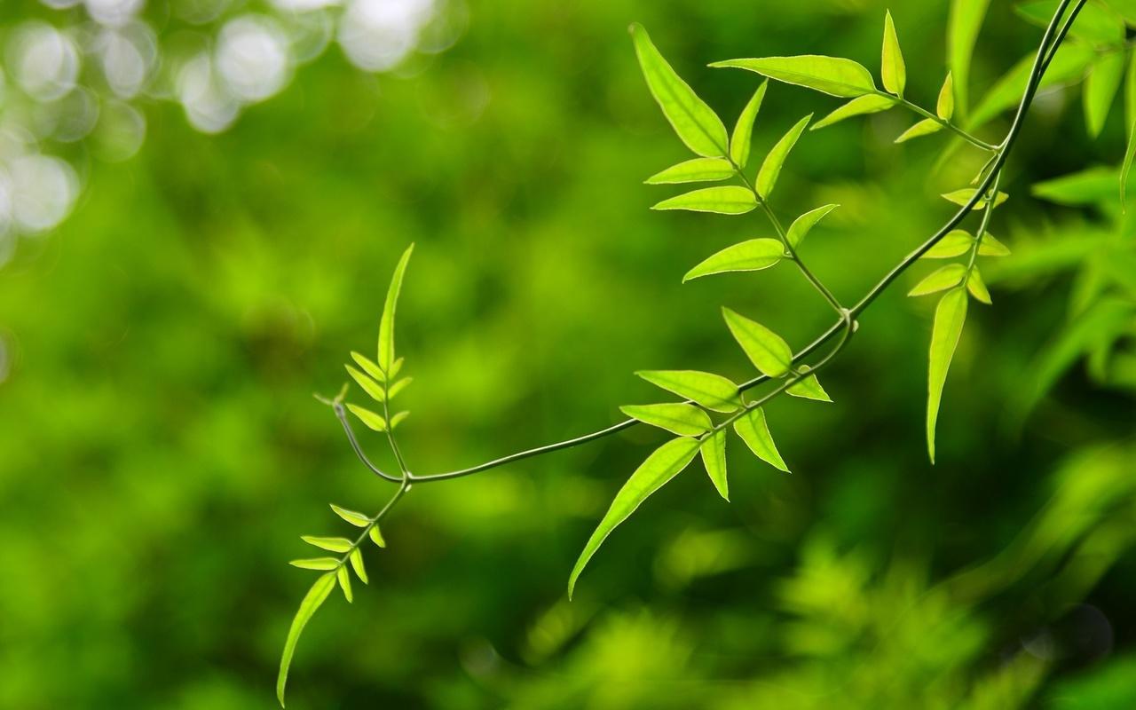 зеленый, фон, листья, цветы, размытие, Макро, листочки