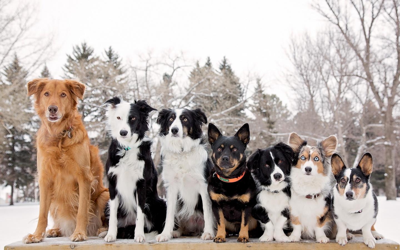 фон, Собаки, друзья
