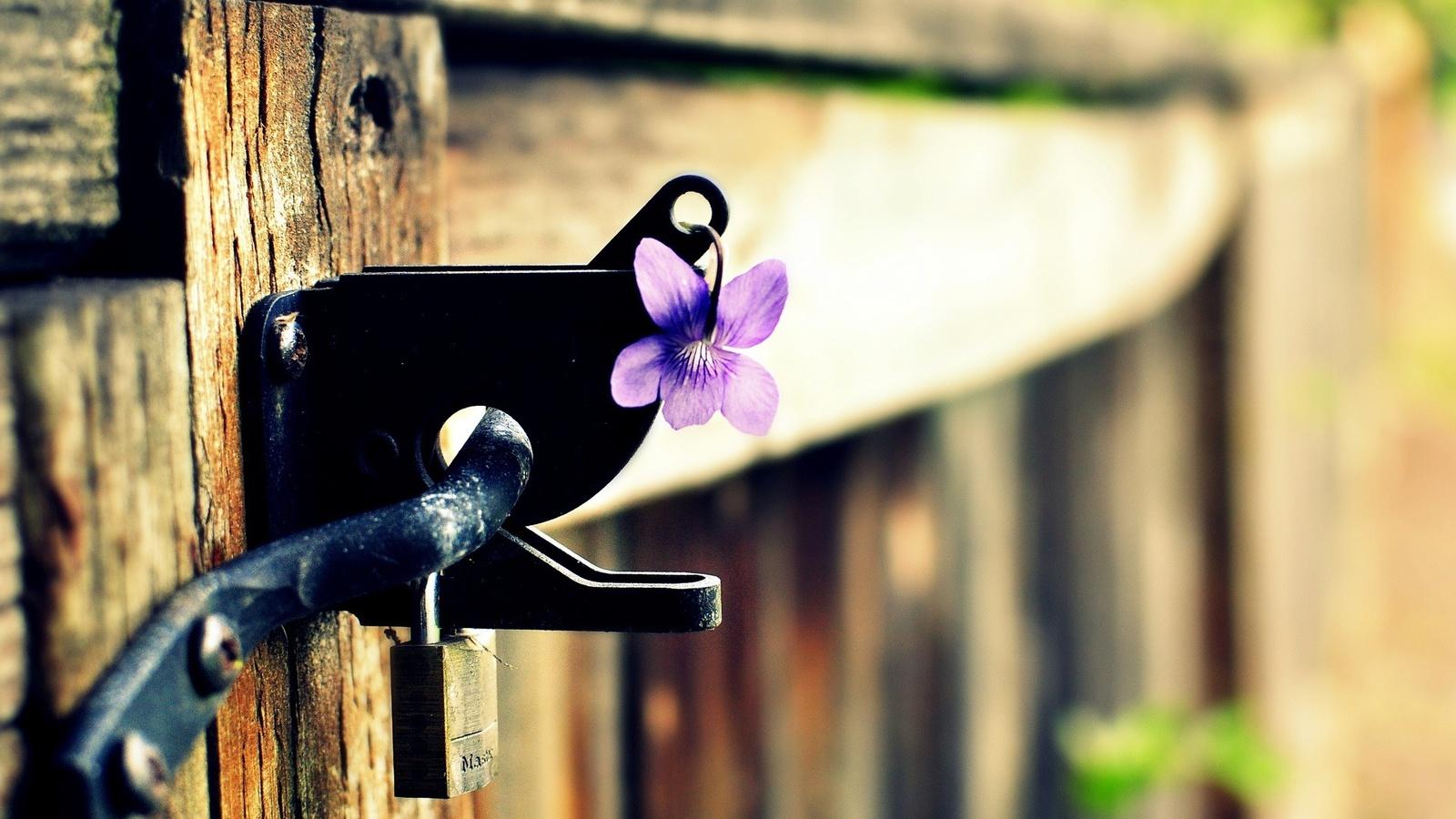 забор, цветок, замок, фиолетовый, Макро, цветочек
