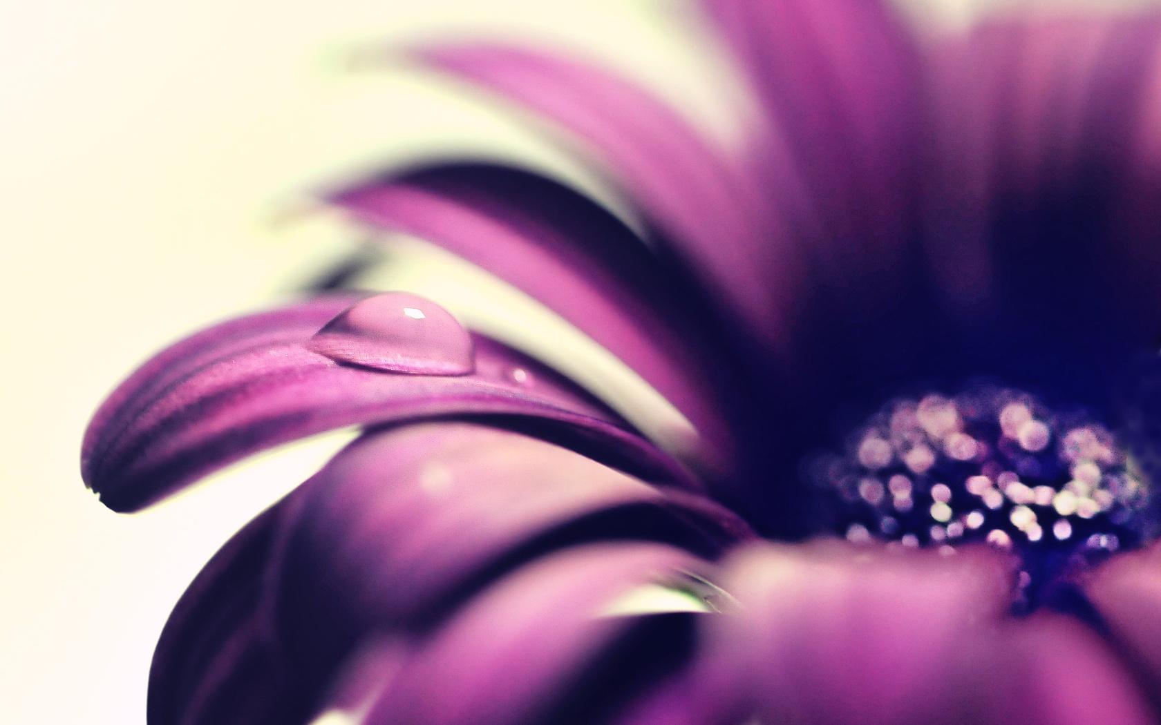 цветочек, капля, вода, роса, цветок, цветы, Макро, макро