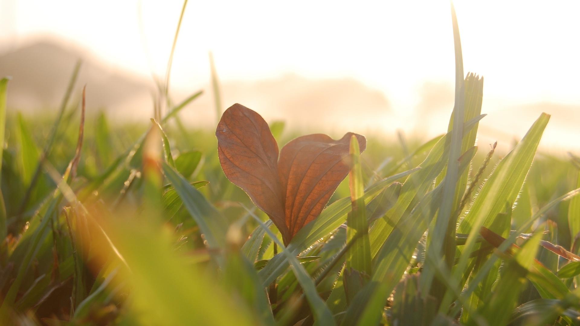 листочек, листик, Макро, leave, macro, трава, листик, зелень