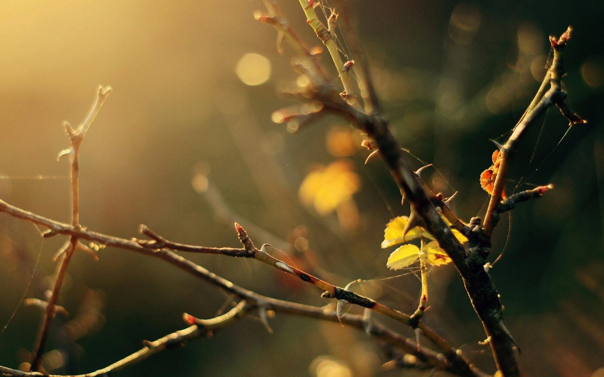 листья, дерево, деревья, листик, Макро, ветки, желтый