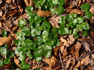 green, light, Plant, brown