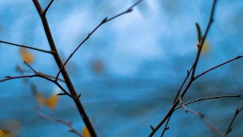 дерево, ветка, Макро, ветки, размытие, голубой, листья