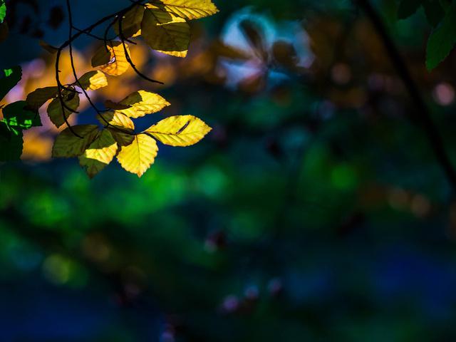 листья, Макро, дерево, листочки, деревья, листик