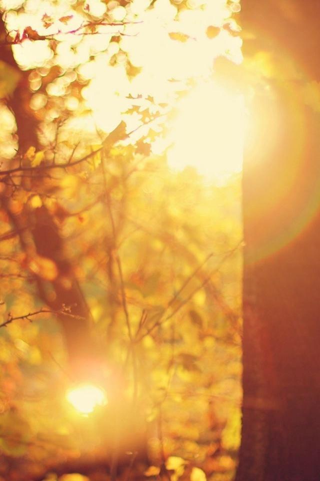 лучи, блики, солнце, Макро, деревья, листья, дерево
