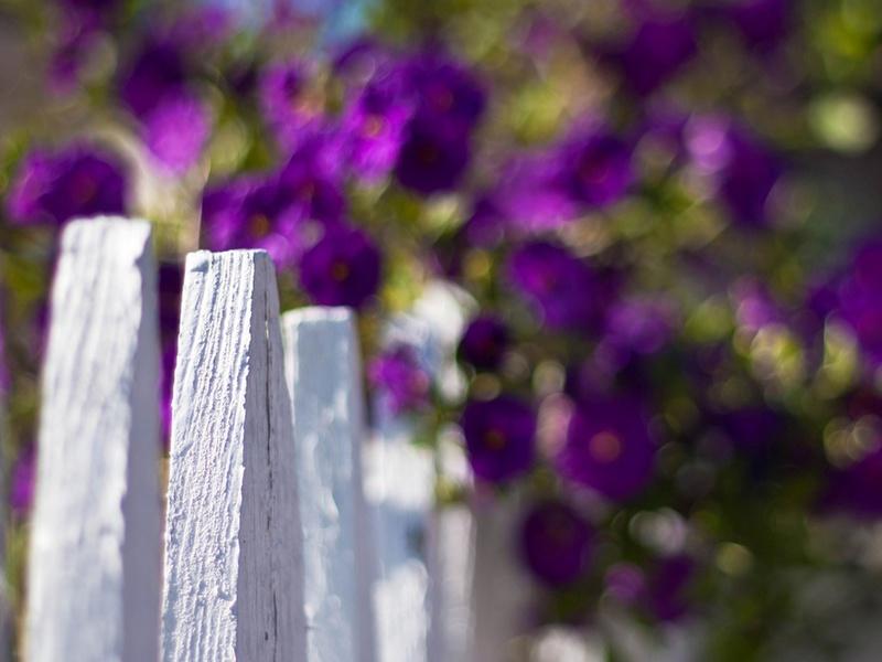 белый, цветы, Макро, цветочки, flowers, ограждение, забор